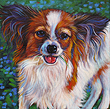 Pet portrait of precious Papillon in San Diego, CA by Marna Schindler