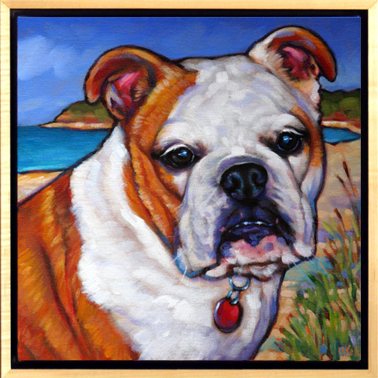 Pet portrait of Bella the Bulldog from Newport Rhode Island