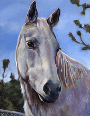 Bubbles Horse Portrait