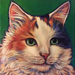 Pet portrait of Cali, beloved Calico fondly remembered in Scottsdale, AZ