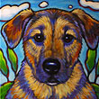 Pet portrait of furry family member Fox, from Chicago, Illinois