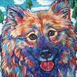 Pet portrait of beloved Keeshond from Painseville, Ohio by Marna Schindler