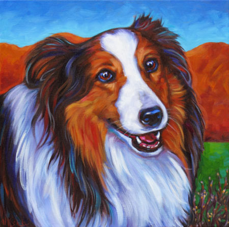 Lady pet portrait, sweet sheltie in Tucson , Arizona