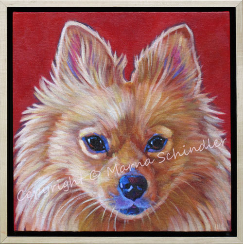 Pet Portrait of LilyBeloved Pomeranian Rescue from Tijuana, living happily in San Diego, CA