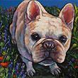 Pet portrait of Mr W., French Bulldog and best buddy from Woodside, CA