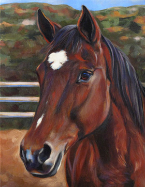 Partner Horse Portrait