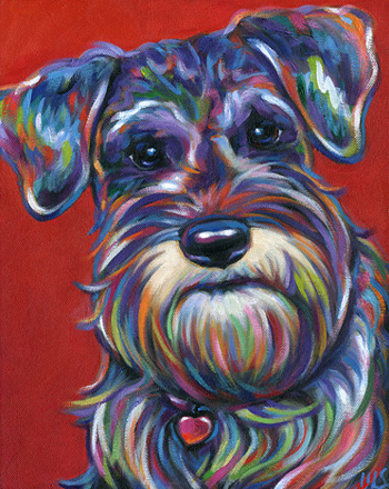Pepper mini schnauzer pet portrait from Knoxville, TN