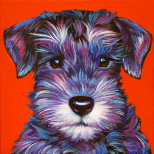 Pet portrait of Zoe, the adorable mini-schnauzer, from Knoxville Tennessee