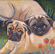 Ginger and Maddy Pug Portrait