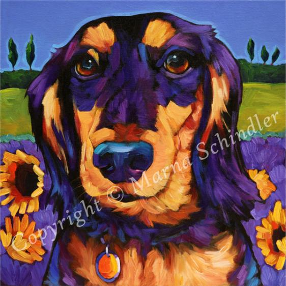 Murphy the Dapper Dachshund from Phoenix AZ, pet portrait by Marna Schindler